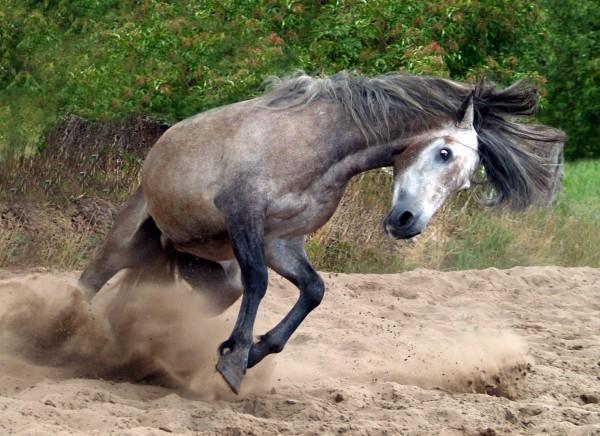poder galope cavalo egua molde hispanico