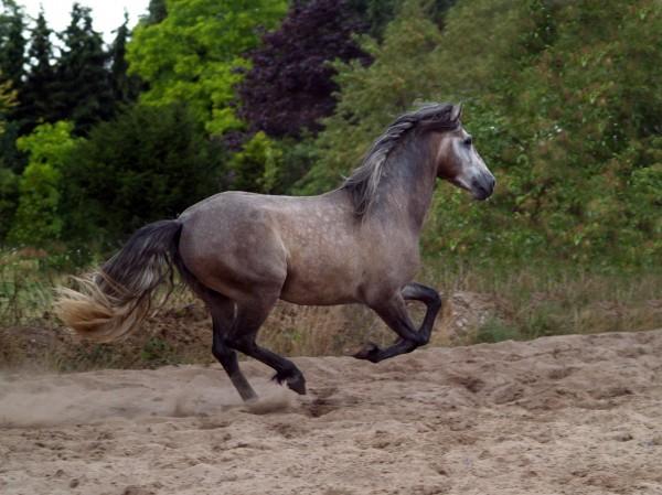poder cavalo egua ceu molde hispanico
