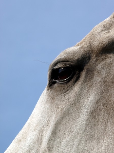 cavalo pele cavalos reflexao juba molde