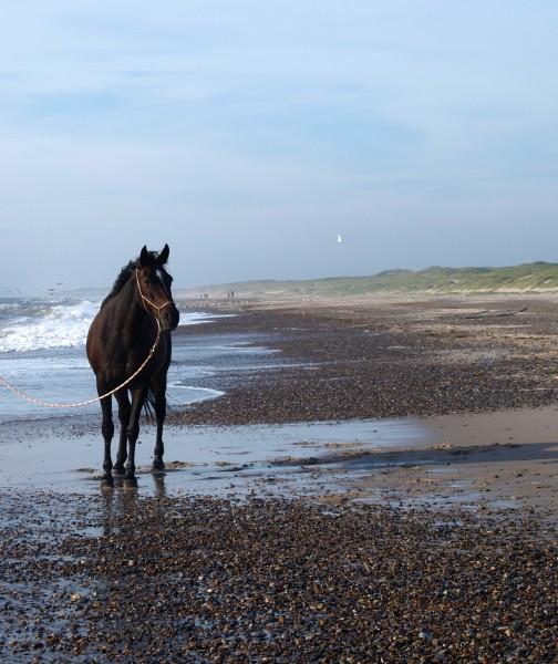 marrom boca cavalo garanhao egua equitacao