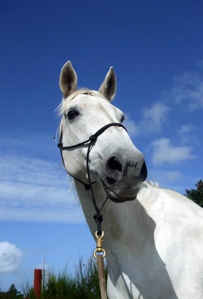 cavalo pele cavalos juba molde
