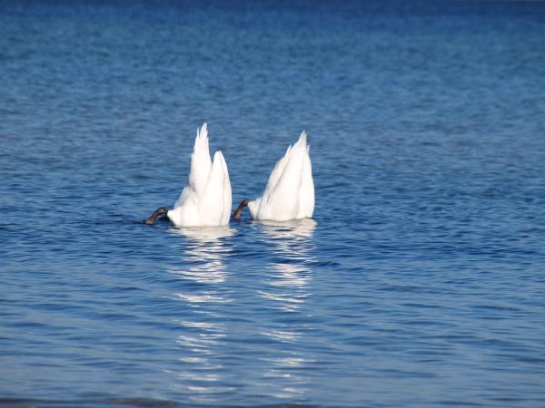 agua mar do norte agua salgada