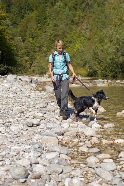 esporte esportes cao caminhadas rio agua