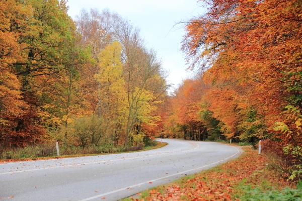 trafego temporada paisagem natureza trafego automovel
