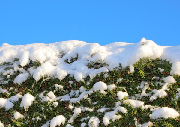 belo agradavel closeup inverno verde de