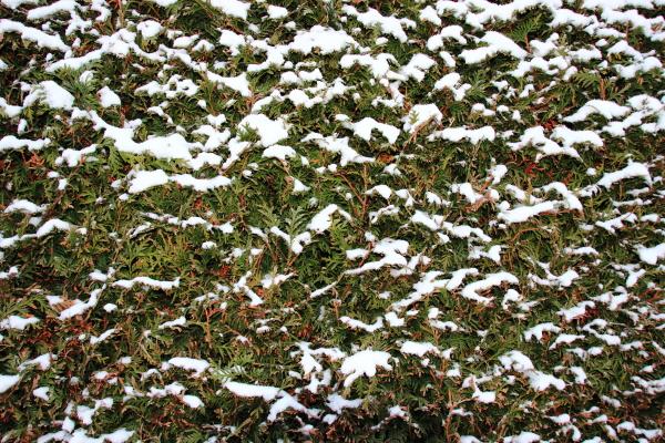 belo agradavel closeup jardim inverno de
