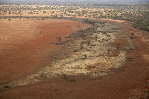 passeio viajar arvore parque nacional africa