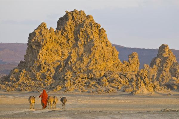 bedouin que traz seus burros home
