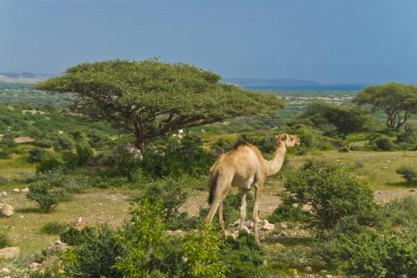 ir passeio viajar arvore animal mamifero