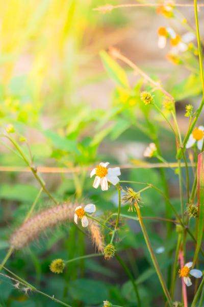 belo agradavel close up ambiente cor
