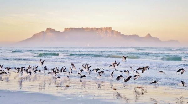 paisagem, com, gaivotas, na, praia, e - 28215156