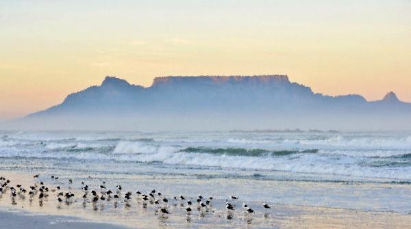paisagem, com, gaivotas, na, praia, e - 28215159
