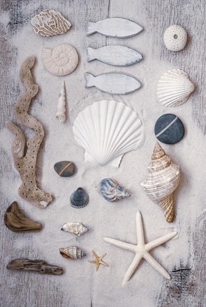 vida, morta, marítima, com, conchas - 28215394