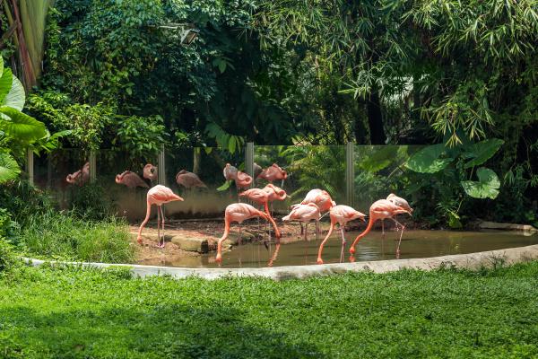 flamingos, no, zoológico, em, um, dia - 28216191