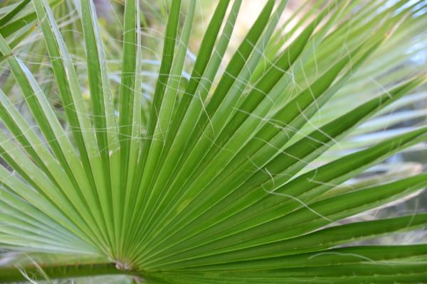 folhas, de, palmeiras, na, província, de - 28217214