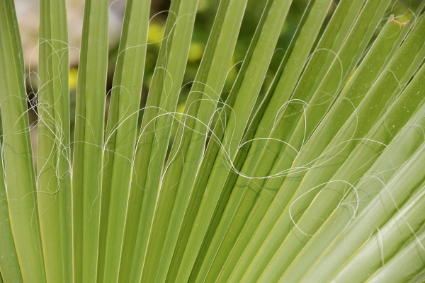 folhas, de, palmeiras, na, província, de - 28217926