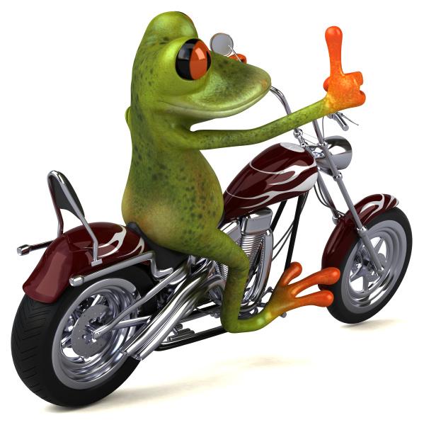 sapo, divertido, em, uma, motocicleta, - - 28217729