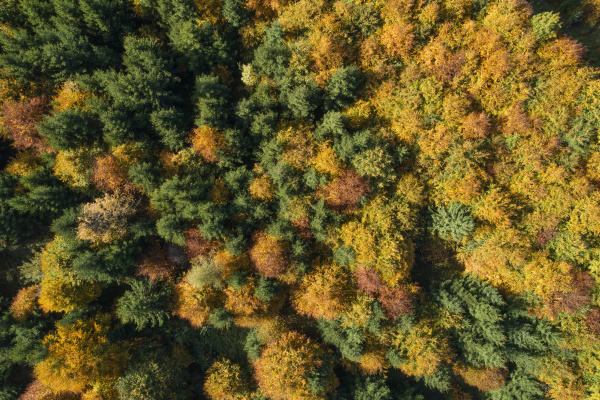 vista de drone de floresta decidua