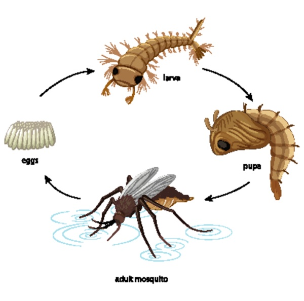 diagrama mostrando ciclo de vida do