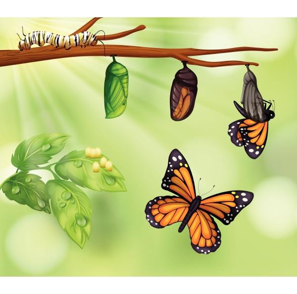 um ciclo de vida de borboleta