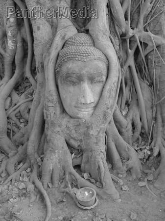 religiao monumento arvore pedra face buda