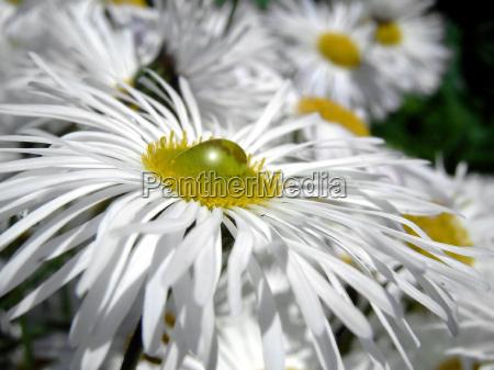 belo agradavel jardim verde flor verao