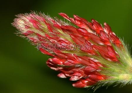 luz close up detalhe flor planta