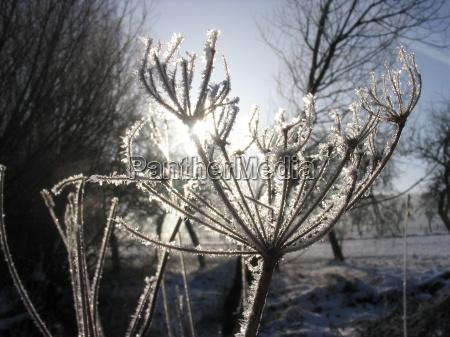 inverno geada gegenlicht hoarfrost prado grama