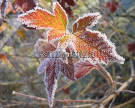 inverno frio geada hoarfrost gelado dezembro
