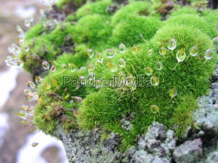 close up molhado gota de orvalho