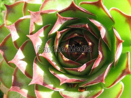 jardin planta verde seco cama espinoso