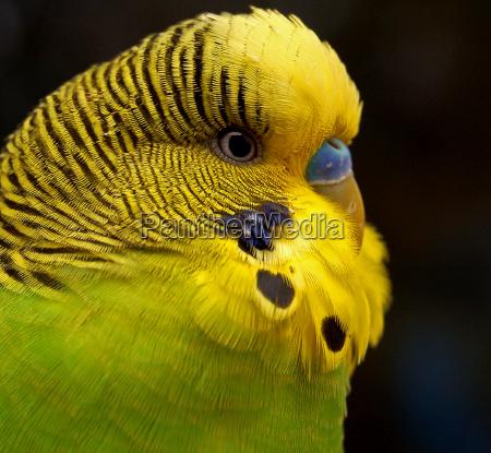 animal animal de estimacao passaro verde