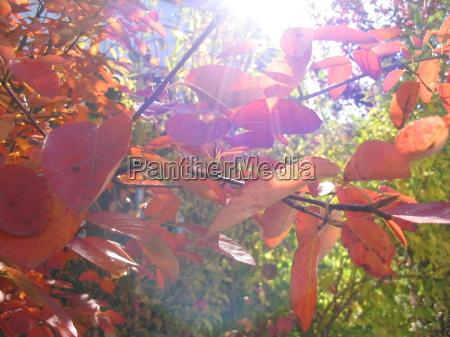 luz folhas outonal gegenlicht folhas de