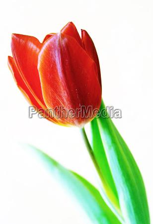 opcional flor planta verde luz solar