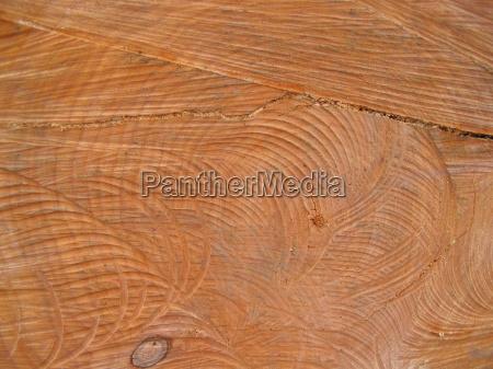 madeira tronco anel anual desmatamento arborizado