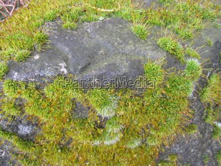 pedra musgo umido mofado musgoso moosbewachsen
