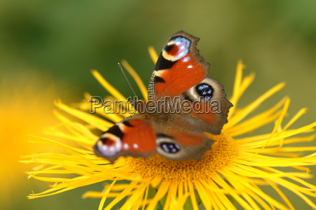 azul belo agradavel existir inseto flor
