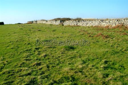 pasture 9