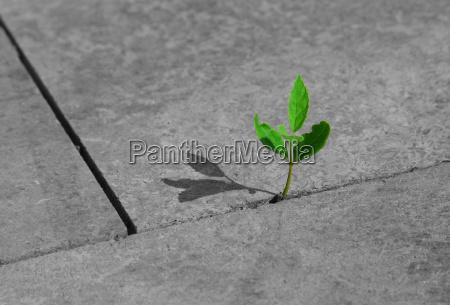 pedra concreto primavera delicado avanco sucesso