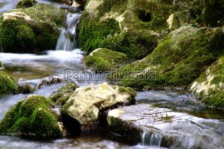 existir liquido relaxamento verde selvagem romantico