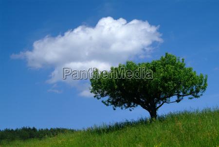 tree with sky 2