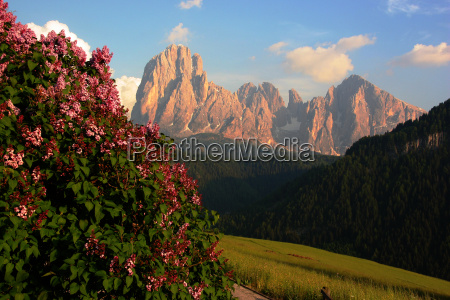 montanhas flor dolomitos alpes primavera lilas