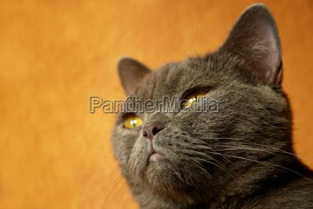 luz close up detalhe cor animal