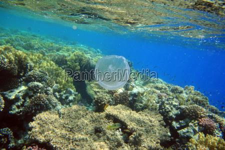 ambiente aguas africa animais egito agua