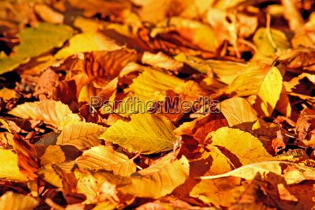 folha folhas cedo amarelo queda outono