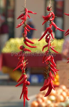 tempero frescura suspensao delicioso vegetal display