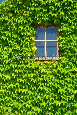house building leaf tree garden plant