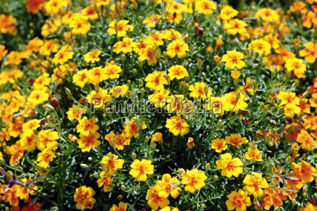 mar, flores, na, ilha, de, mainau - 514088