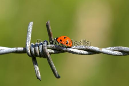 industria verde verao besouro ferro pontos