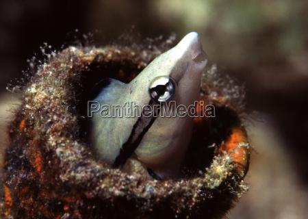risadinha sorrisos dentes peixe amigavel subaquatico